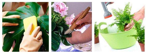 Как очистить комнатные растения от пыли