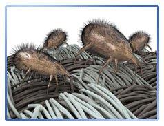 Уничтожение пылевого клеща в коврах и ковролинах
